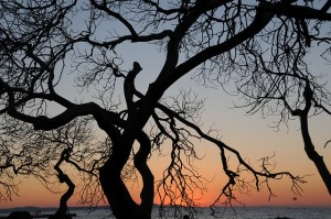 tree-675073_640